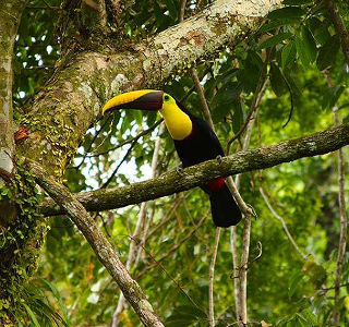 bird in rainforest in Costa Rica