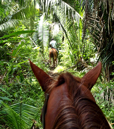 horse in a tropical forest