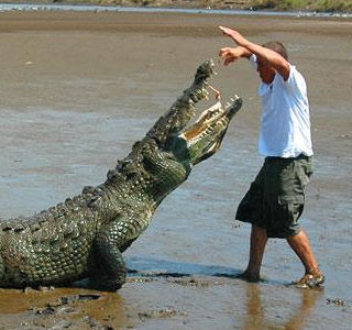 man with crocodile in Tarcoles River