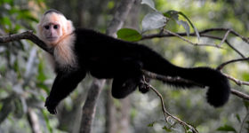 Four Fantastic Wildlife Experiences in Costa Rica